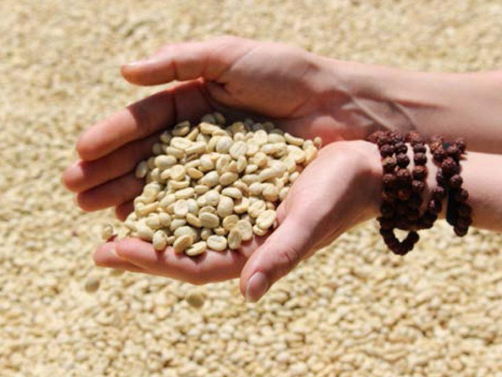 Kaffe Projekt Sambhav Nepal